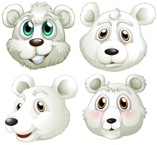 Têtes d'ours polaires
