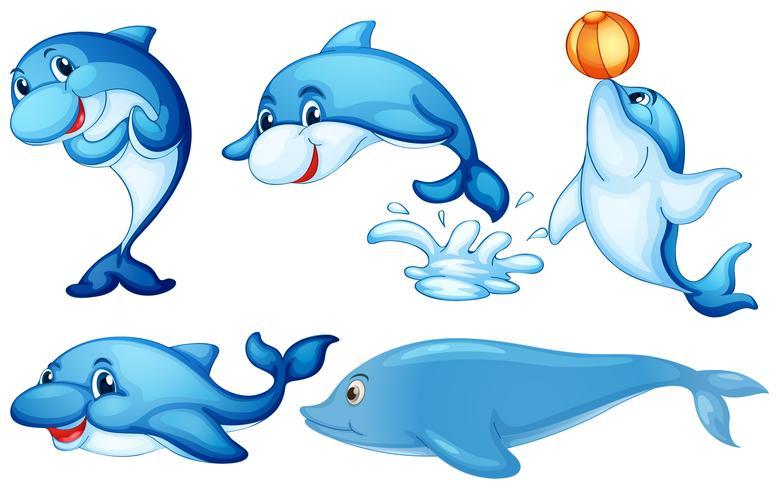 Delfines juguetones