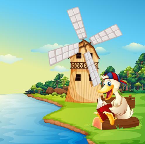 A duck reading a book near the windmill vector