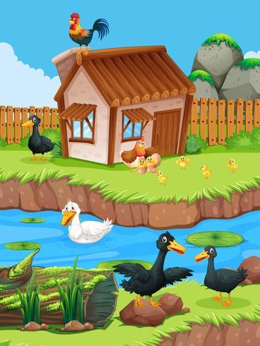 Scena di fattoria con anatre e polli