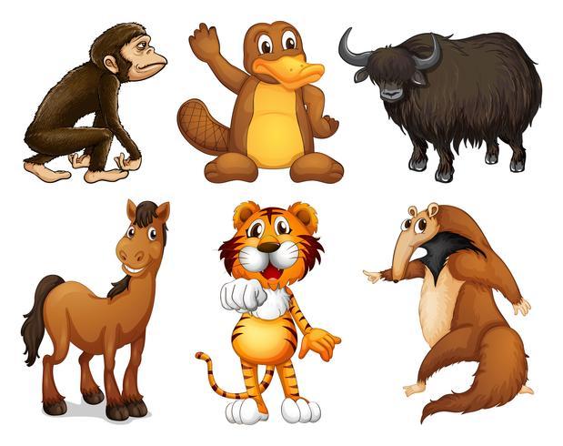 Sex olika typer av fyrbenta djur