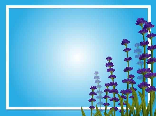 Gränsmall med lavendelblommor