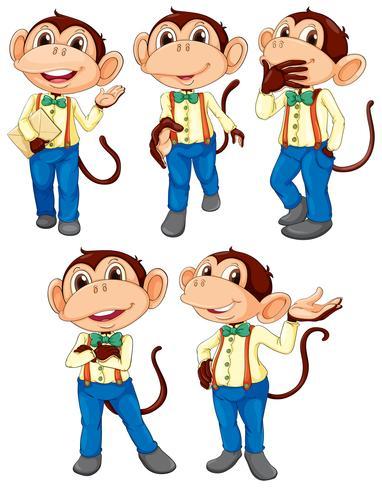 Fünf Affen, die Blue Jeans tragen
