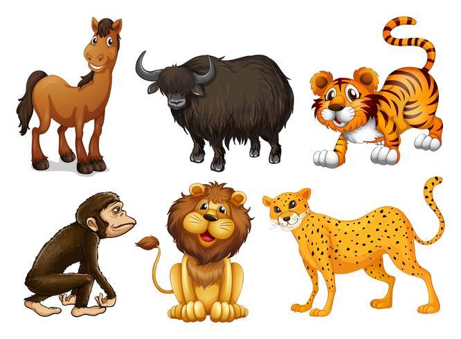Verschiedene Arten von vierbeinigen Tieren