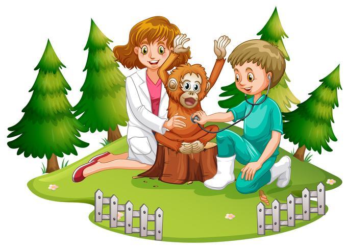 Veterinario con orangután en el bosque