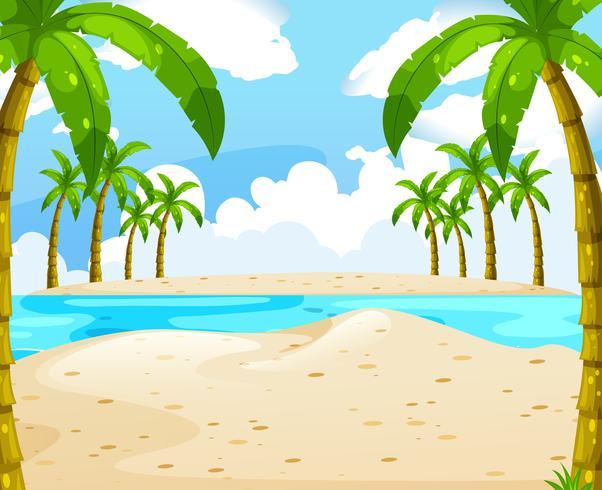 Strand med kokosnötter