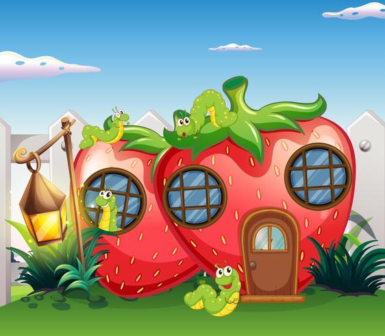Jordgubbar hus med larver i trädgården