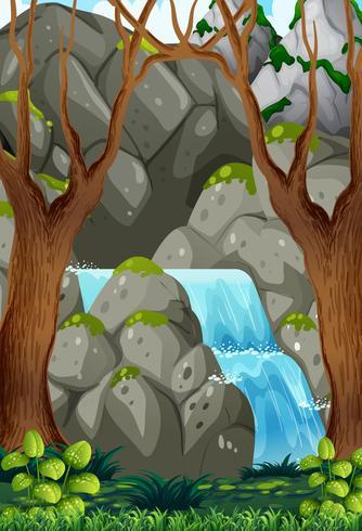 Natureza da água na floresta