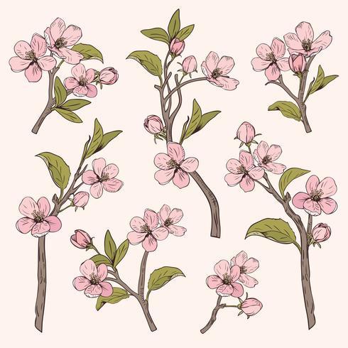 Árvore de florescência. Definir coleção. Entregue ramos cor-de-rosa botânicos tirados da flor no fundo bege. Ilustração vetorial