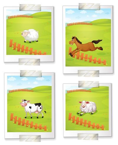 Cuatro fotos de animales