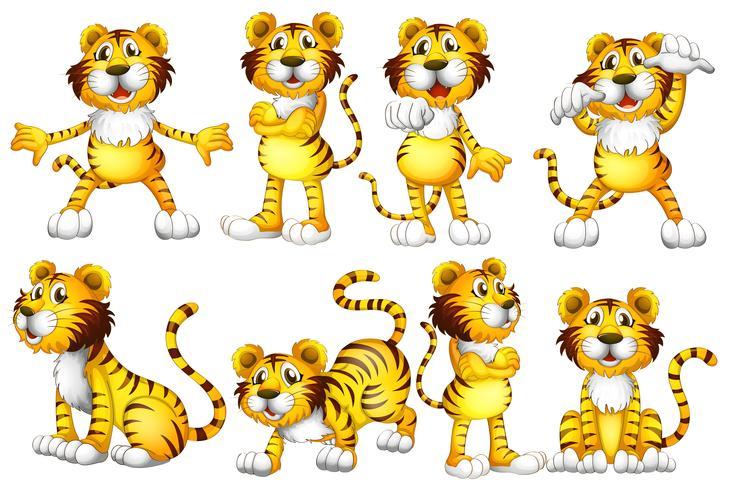 Conjunto de tigre vector