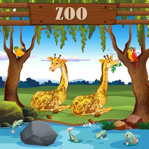 Jirafa en el zoo vector