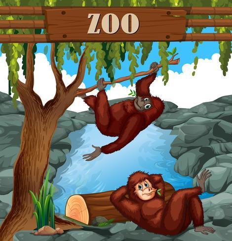 Scimmia nello zoo vettore