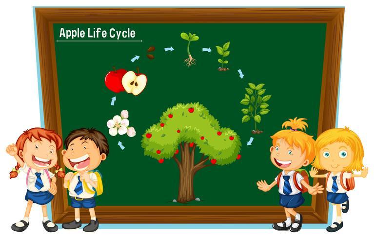Alunos e diagrama do ciclo de vida da maçã vetor