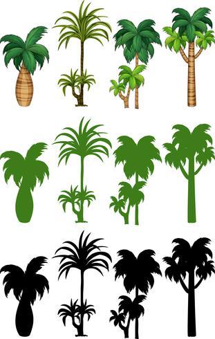 Conjunto de palmeras de diseño. vector