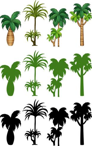 Set Palmeentwurf