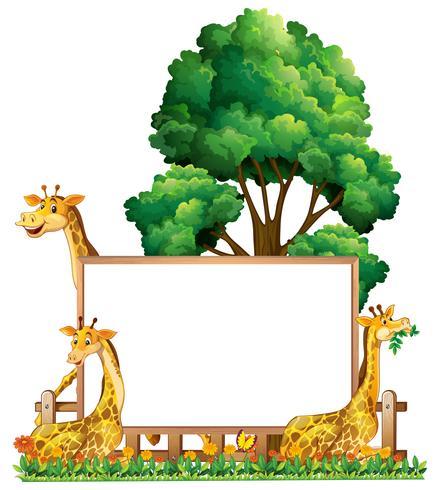 Modelo de placa com três girafas no parque