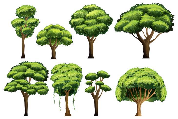 Ensemble d'arbres vecteur
