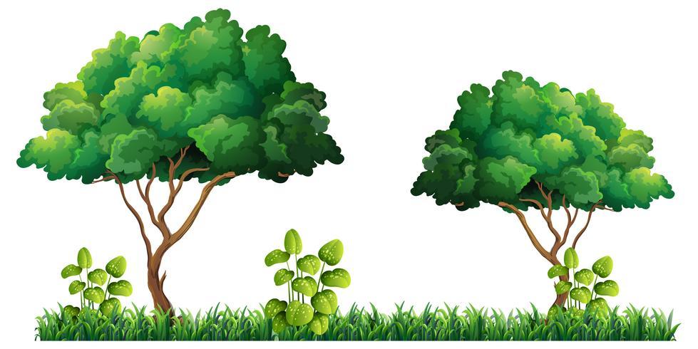 Natur träd på vit bakgrund vektor