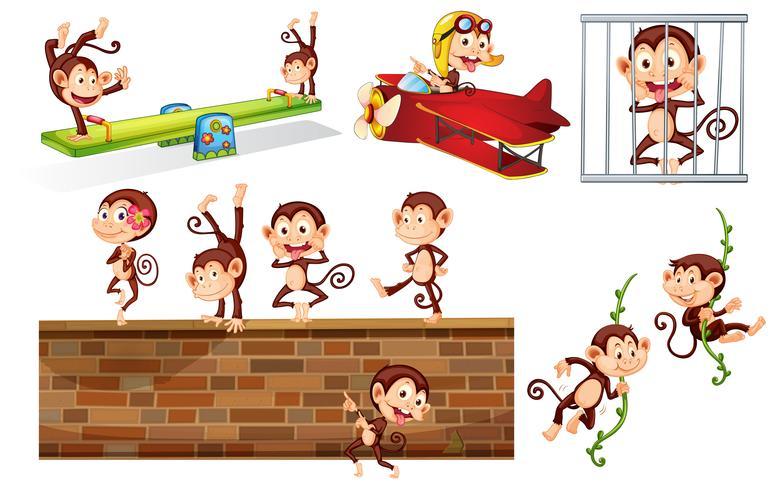 Um conjunto de macaco brincalhão