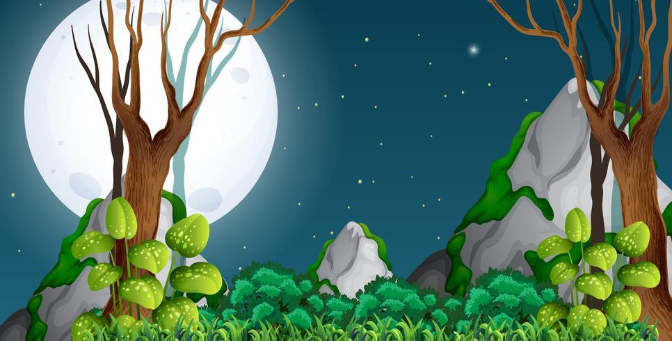 Una foresta di notte vettore