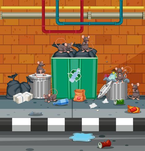 Grupo de ratas en calle sucia vector