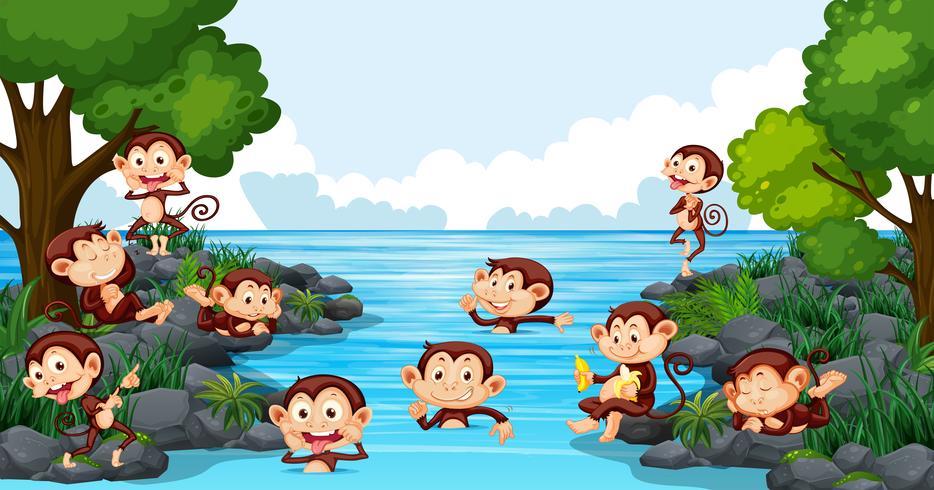 Mono jugando en el lago vector