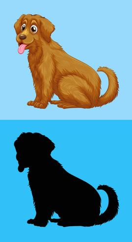 Cute goldenretriever and its silhouette