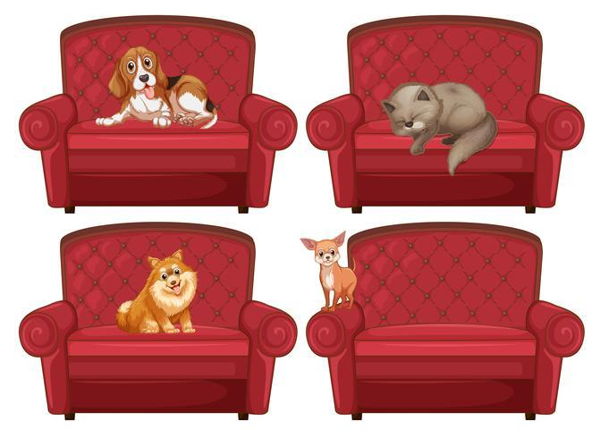 Husdjur vid soffan