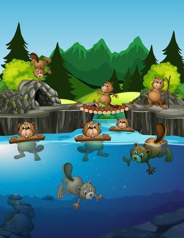 Bäver som bor i sjön