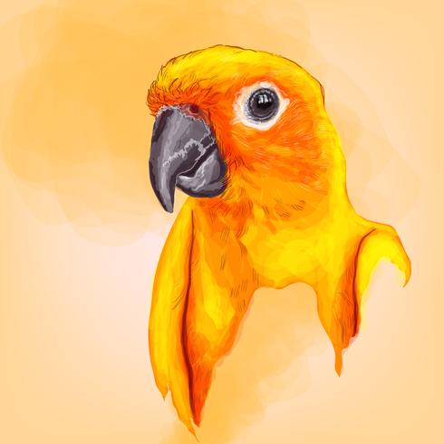 colorful parrot with hand drawing vector