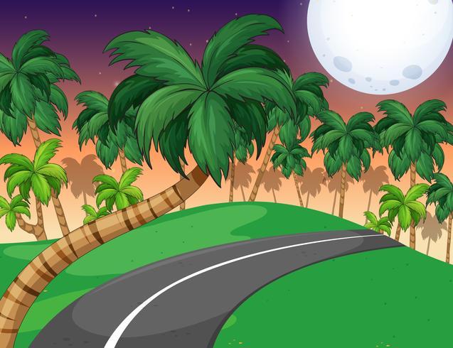 Scen med palmskog på natten