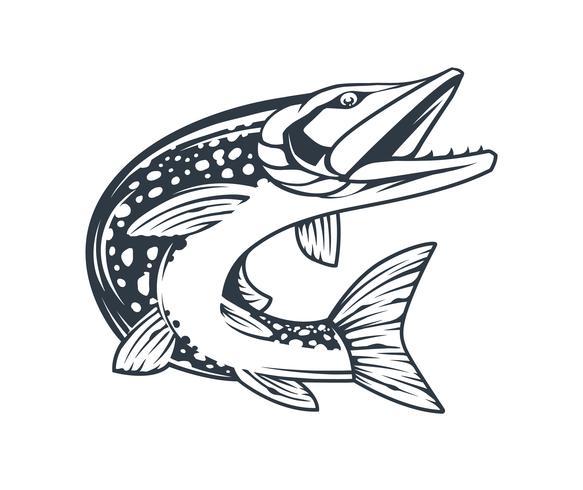 Pike peces monocromo vector aislado