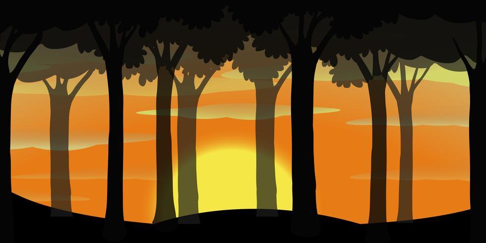 Schattenbildszene des Waldes bei Sonnenuntergang