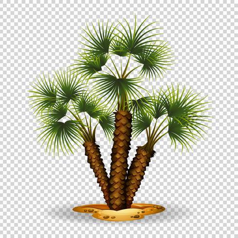 Trädgårds tema med palmträd vektor