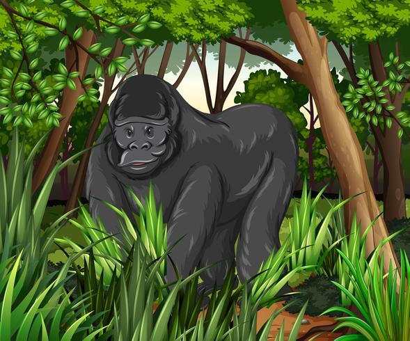 Gorilla som bor i djungeln vektor