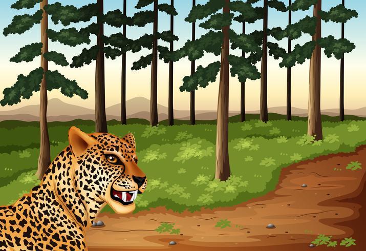 Um leopardo na floresta