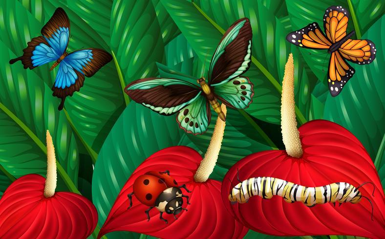 Schmetterlinge und andere Insekten im Garten