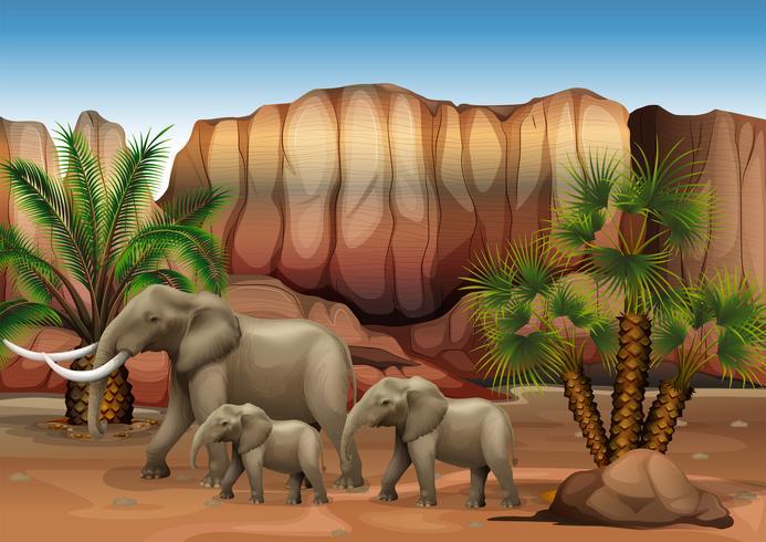 Elefantes en el desierto