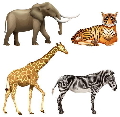 Quattro animali africani