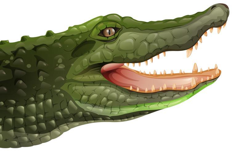 Ein Krokodil