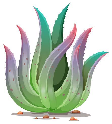 Une Plante D 39 Aloe Vera Telecharger Vectoriel Gratuit