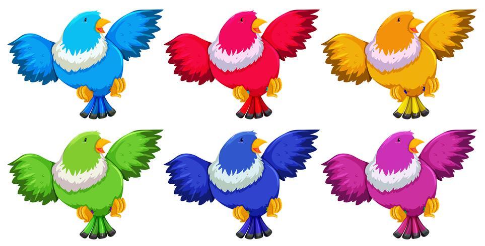Pájaros con seis colores sobre fondo blanco