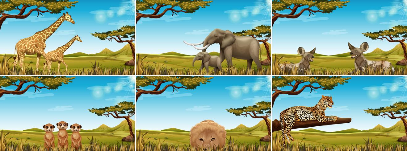 Conjunto de animais selvagens na savana vetor