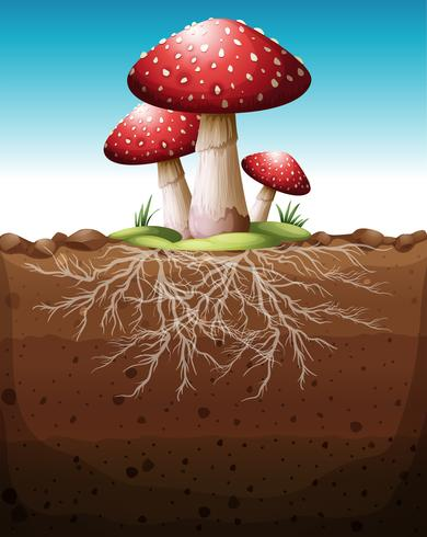 Red mushroom growing from the ground