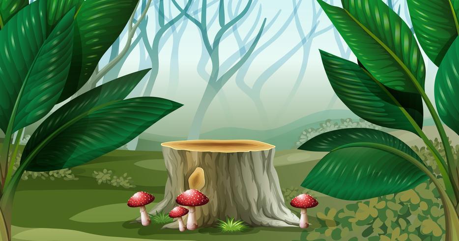 Scène met mist in het bos