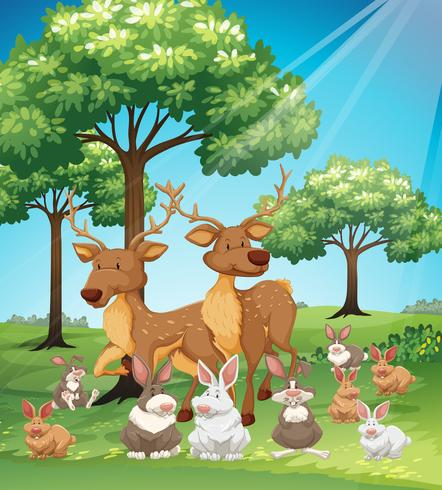Deers and rabbits in the field