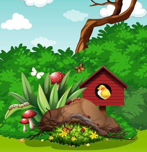 Bird and bugs in the garden
