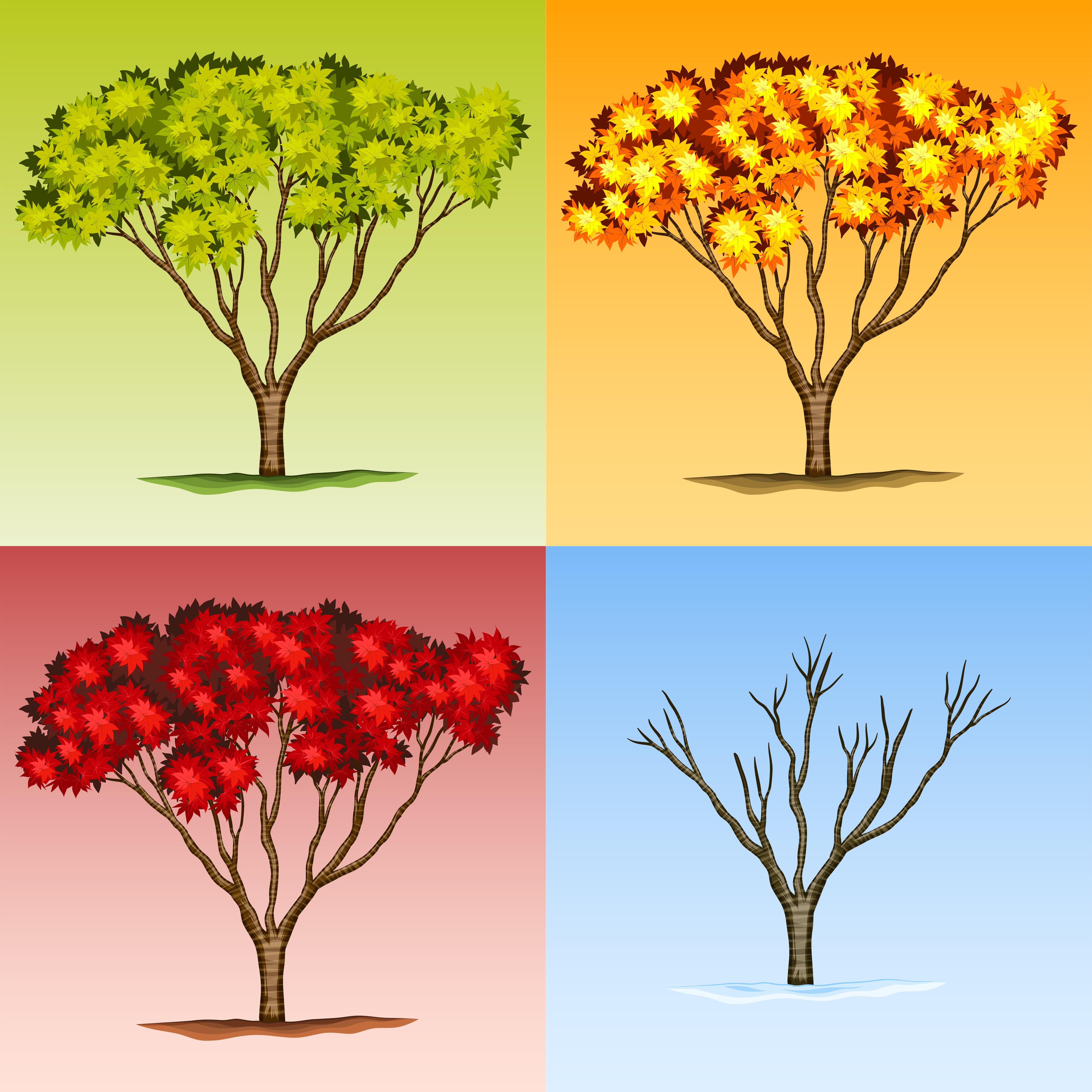 scene of tree in different seasons