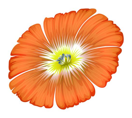 Uma flor de laranjeira